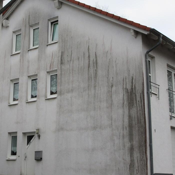 Algen an Hausfassade