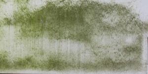 Algen an der Fassade