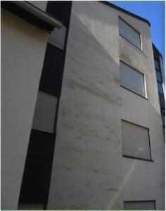 Grünalge an der Hausfassade