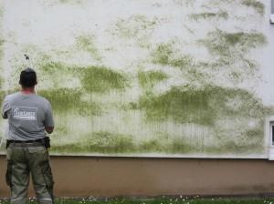 Algen-Fassadenreinigung